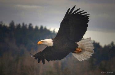 Este es el nuevo tráiler de Eagle Flight