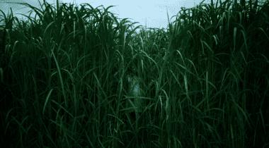 Imagen de En la hierba alta: Tráiler y fecha de estreno en Netflix de la adaptación de Stephen King